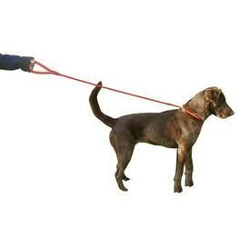 Miro Rubber Handled Dog Slip Lead With Figure 8 Training Aid - 120cm x 13mm