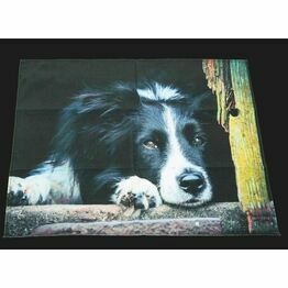 Collie Dog Tea Towel From Country Matters