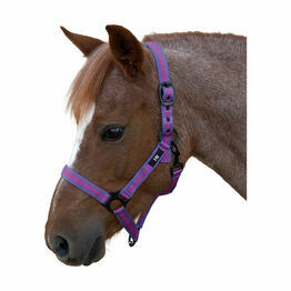 Hy Duo Head Collar - Purple/Black