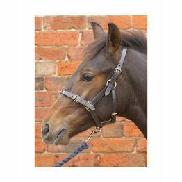 Hy Leather Foal Head Collar - Black