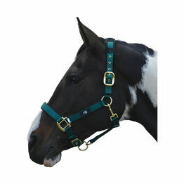 Hy Deluxe Padded Head Collar - Cob