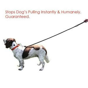 """The Lead Easy"" Anti Pulling Lead 13mm x 205cm"
