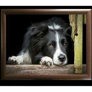 Collie Lap Tray Country Matters