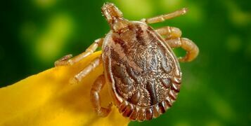 Top 5 Tips To Avoid Tick Bites
