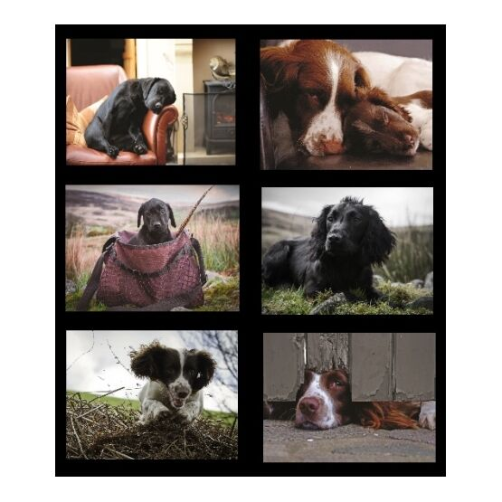 Country Matters Working Dog Placemats